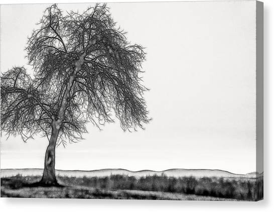 Artistic Black And White Sunset Tree Canvas Print