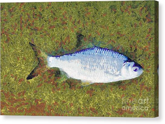 Artistically Painted Fish Canvas Print by Odon Czintos