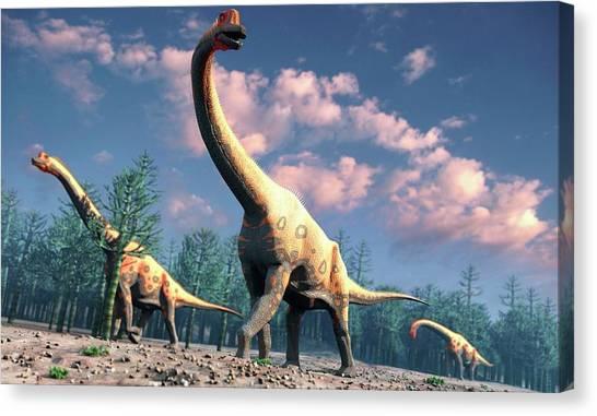 Brachiosaurus Canvas Print - Artwork Of Brachiosaurus by Mark Garlick/science Photo Library