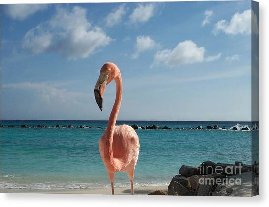 Aruba Hairy Eyeball Canvas Print