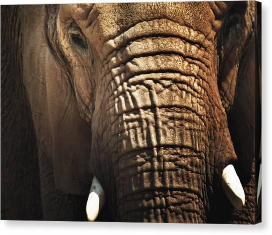 As High As An Elephant's Eye Canvas Print by Susan Desmore
