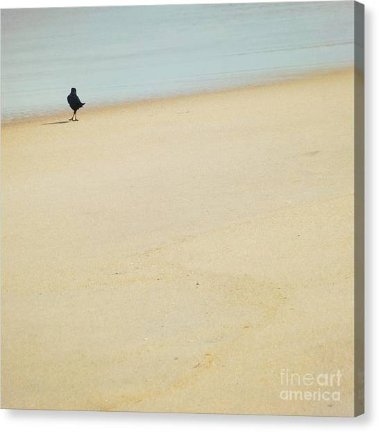 As I Wander Canvas Print by Sharon Kalstek-Coty
