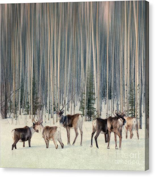 Yukon Canvas Print - Caribou And Trees by Priska Wettstein