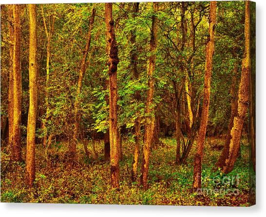 Ash Trees Canvas Print