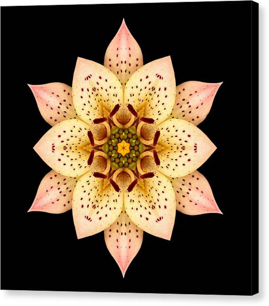 Asiatic Lily Flower Mandala Canvas Print