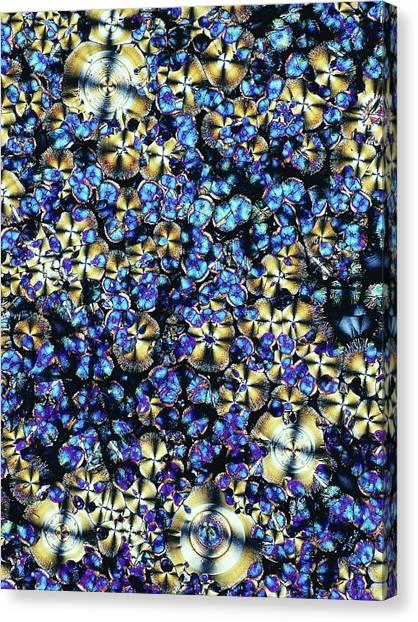 Biochemical Canvas Print - Asparagine Crystals by Alfred Pasieka