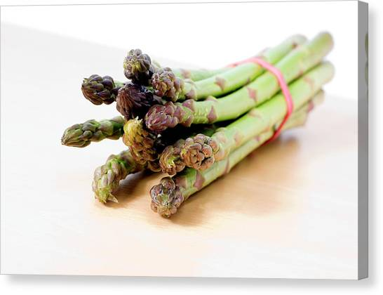 Asparagus Canvas Print - Asparagus by Daniel Sambraus/science Photo Library