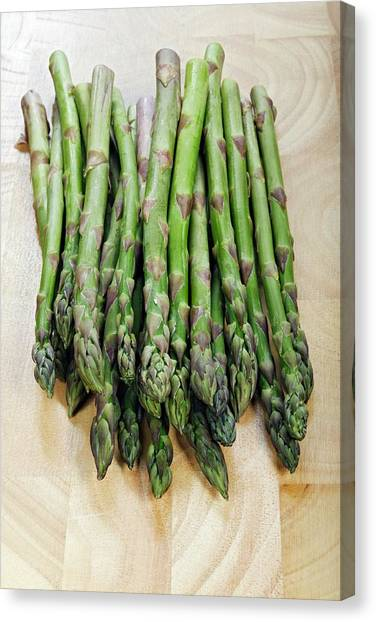 Asparagus Canvas Print - Asparagus by Geoff Kidd/science Photo Library
