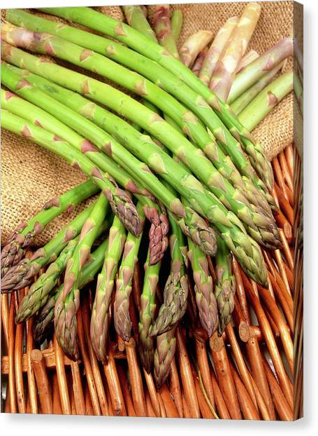 Asparagus Canvas Print - Asparagus Spears (asparagus Officinalis) by Ray Lacey/science Photo Library