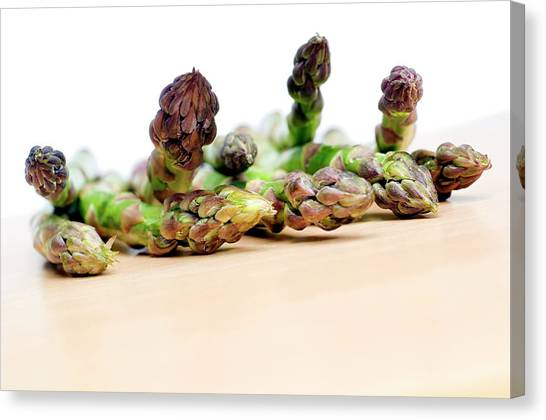 Asparagus Canvas Print - Asparagus Spears by Daniel Sambraus/science Photo Library