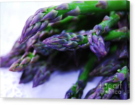 Asparaguy Purple Eye Canvas Print