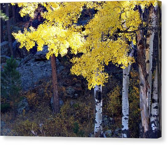 Aspen Bright Canvas Print