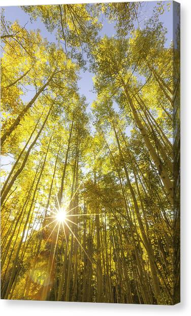 Aspen Day Dreams Canvas Print
