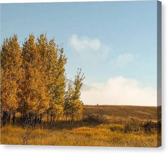 Aspen Fog Canvas Print by Curtis Stein