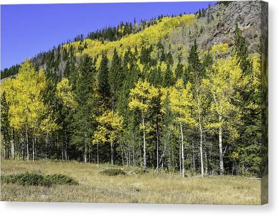 Aspen Foliage Canvas Print by Tom Wilbert