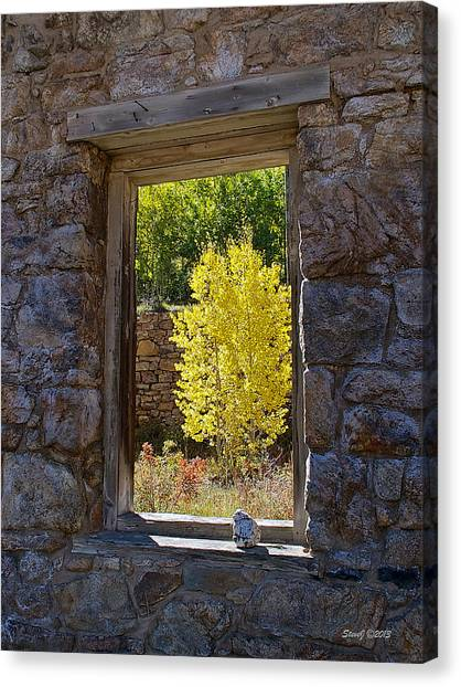Aspen Gold Through Time Canvas Print