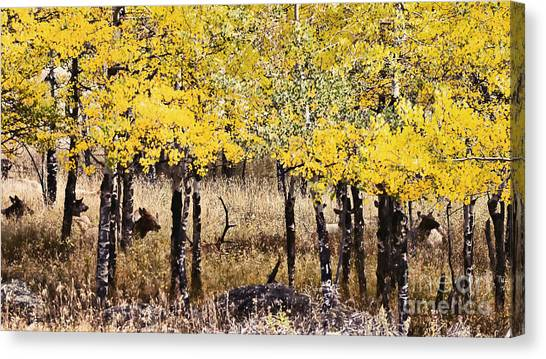 Aspen Grove Afternoon Canvas Print