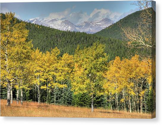 Aspen In Fall Mt Evans Canvas Print