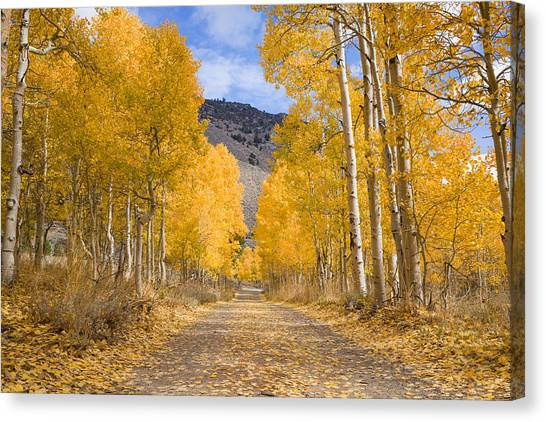 Canvas Print featuring the photograph Aspen Lane Wide Crop by Priya Ghose