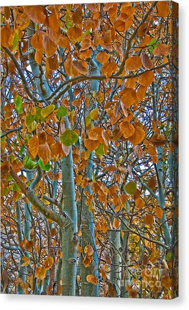 Canvas Print featuring the photograph Aspen Leaves In The Fall by Mae Wertz
