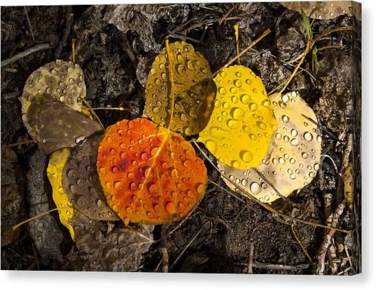 Aspen Leaves On Bishop Creek Canvas Print