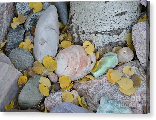 Aspen Leaves On The Rocks Canvas Print