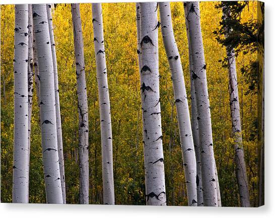 Aspen Light 2 Canvas Print