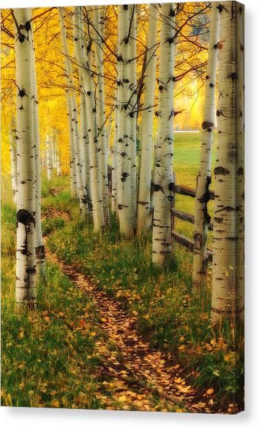 Aspen Path Canvas Print