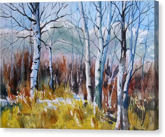 Aspen Thicket Canvas Print