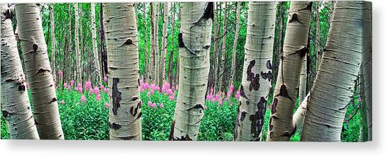 Teton National Forest Canvas Print - Aspen Trees In A Grove On The Slope by Panoramic Images