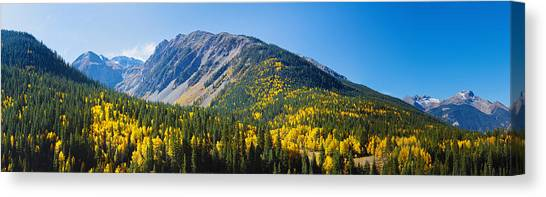 4x4 Canvas Print - Aspen Trees On Mountain, Little Giant by Panoramic Images