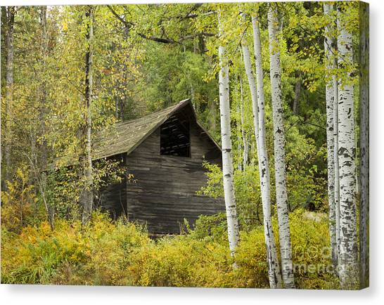 Aspens And Barn Canvas Print