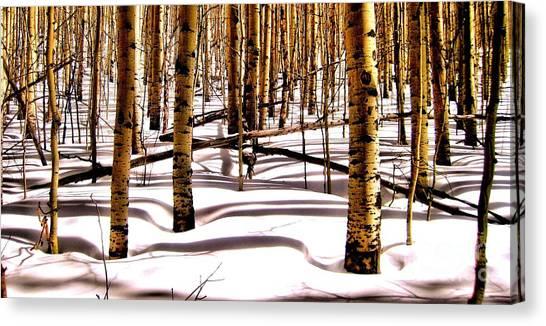 Aspens In Winter Canvas Print by Claudette Bujold-Poirier