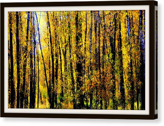 Aspens In Yellowstone National Park Canvas Print