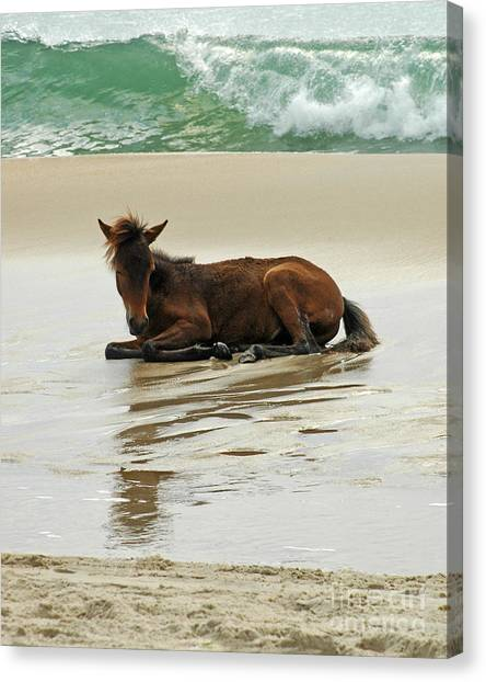 Assateague Foal Canvas Print