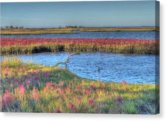 Asseteague Island Salt Marsh Canvas Print