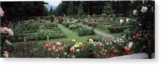 International Rose Test Garden Canvas Prints | Fine Art America
