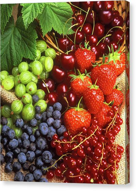 University Of Virginia Canvas Print - Assortment Of Summer Fruit by Ray Lacey/science Photo Library