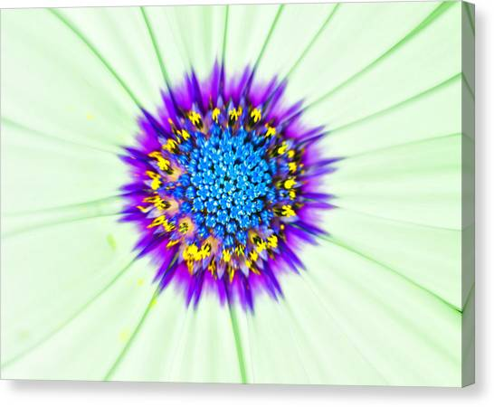 Aster Number Two Canvas Print