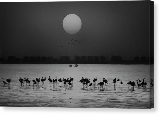 Sea Birds Canvas Print - At A Glance by Ahmed Thabet