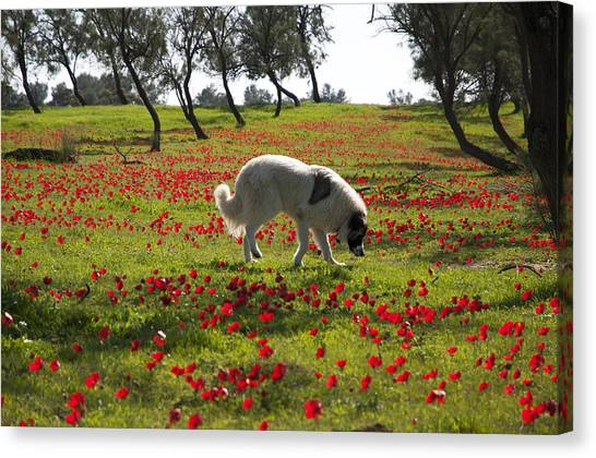 At Ruchama Forest Israel 1 Canvas Print