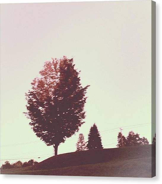Jerseys Canvas Print - At The Bay Series #trees #landscape by Red Jersey