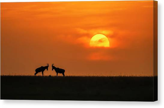 At The Sunset Canvas Print by Jun Zuo