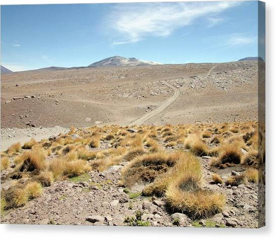 Atacama Desert Vegetation Canvas Print by European Southern Observatory