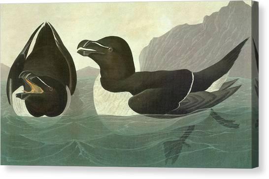 Razorbills Canvas Print - Audubon Razorbill by Granger