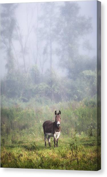 August Morning - Donkey In The Field. Canvas Print
