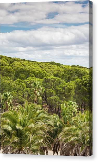 Cellar Canvas Print - Australia, Barossa Valley by Walter Bibikow