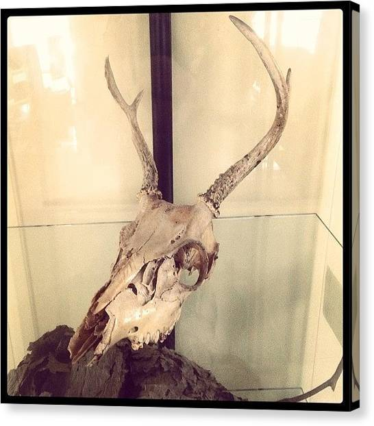 Satan Canvas Print - Authentic Demon Skull. #skull #demon by Craig Kempf