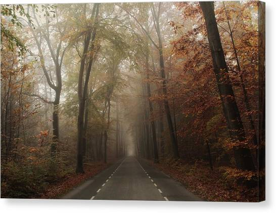 Foggy Forests Canvas Print - Autmnal Equinox by Vincent Croce