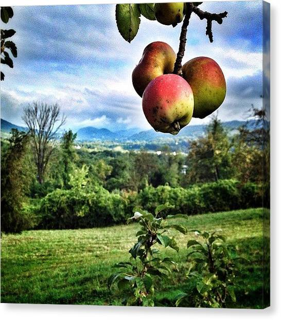 Vermont Canvas Print - #autumiscoming #apples #vt #vermont by James Whaley Cart